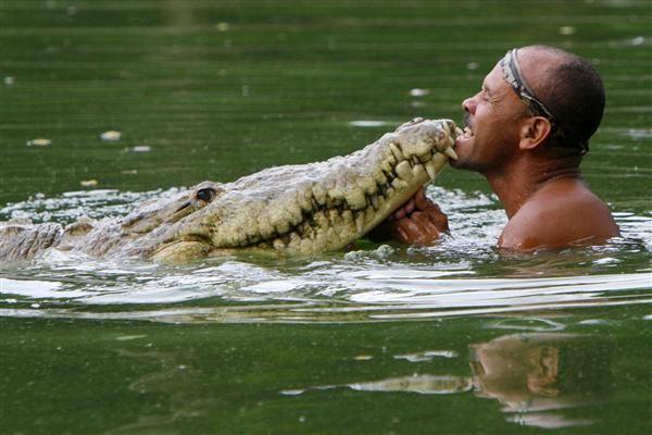 Krokodyl Pocho